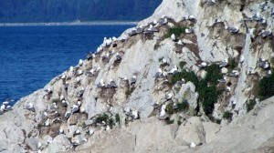 Birds on Shore