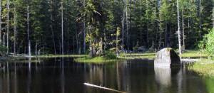 Forest Loop Hike