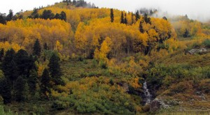 LaPlata Canyon Fall