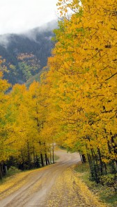 LaPlata Canyon Fall2