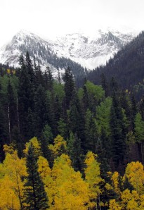 Sept snow and aspen gold