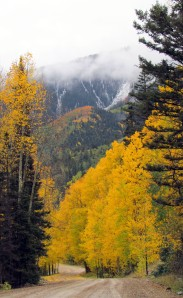 Snow and aspen gold
