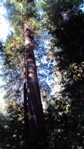 Spiral tree
