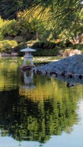 Japanese Garden11