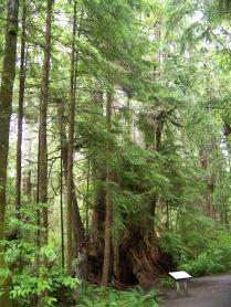 Big Cedar (3)