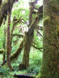 Hall of Mosses (12)