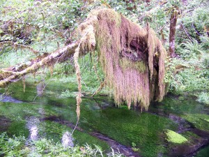Hall of Mosses (2)