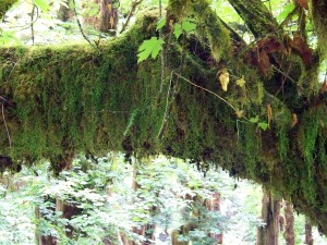 Hall of Mosses (9)
