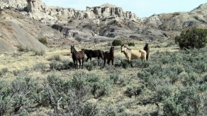 Horses in Lybrook Badlands
