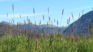 Kawuneeche Valley2