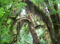 Hall of Mosses (10)