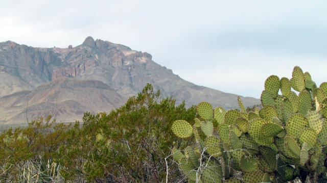 Chisos and cactus.jpg