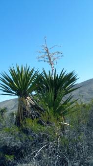 Yucca Flats
