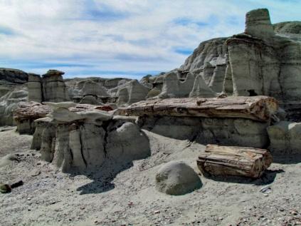 Petrified Logs (10)